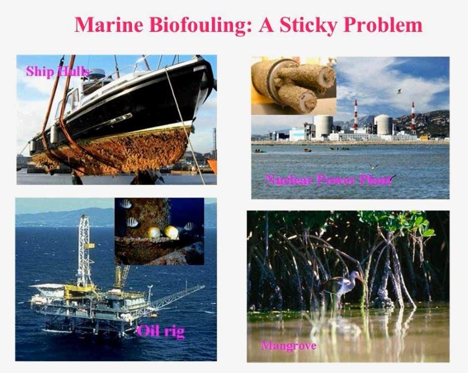 marine-biofouling